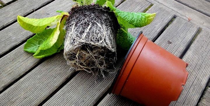 Resultado de imagen para trasplante de plantas